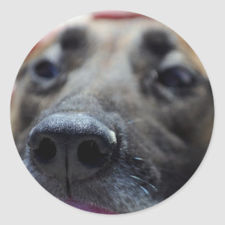 A Dogs Sense of Smell Classic Round Sticker