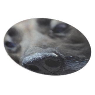 A Dogs Sense of Smell Melamine Plate