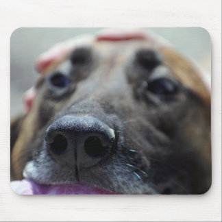A Dogs Sense of Smell Mouse Pad