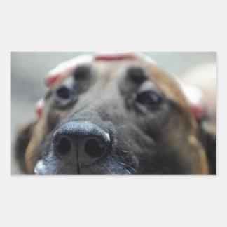 A Dogs Sense of Smell Rectangular Sticker