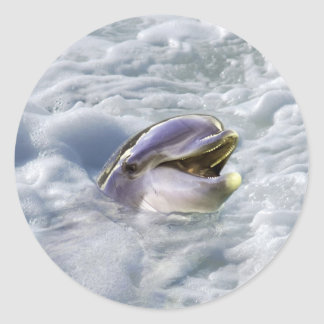 A dolphins best smile classic round sticker