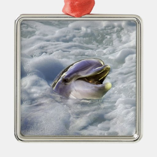 A dolphins best smile christmas tree ornament