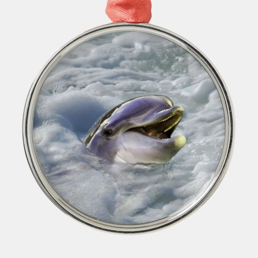 A dolphins best smile ornament