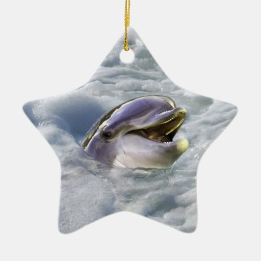 A dolphins best smile christmas ornament