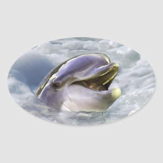 A dolphins best smile oval sticker