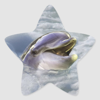 A dolphins best smile star sticker