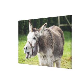 A donkey canvas print