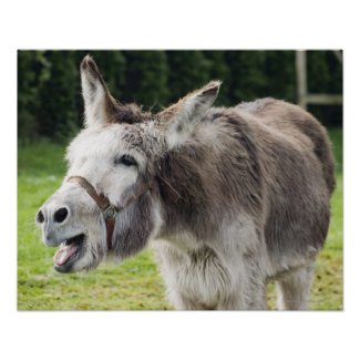 A donkey posters