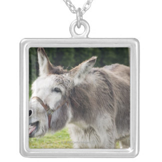 A donkey silver plated necklace