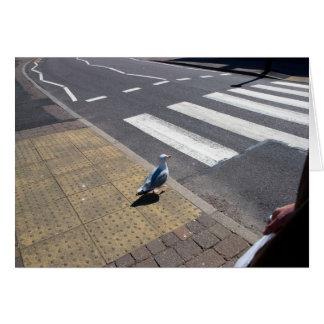 A dove on the crosswalk card