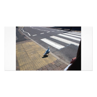 A dove on the crosswalk card