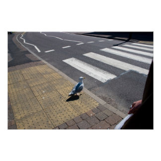A dove on the crosswalk poster