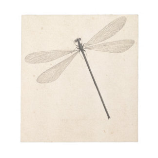 A Dragonfly, by Nicolaas Struyk, early 18th c. Notepad