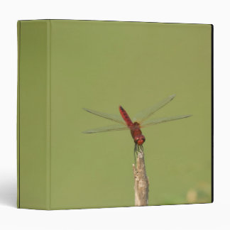 A Dragonfly rests momentarily on a dried weed 3 Ring Binder