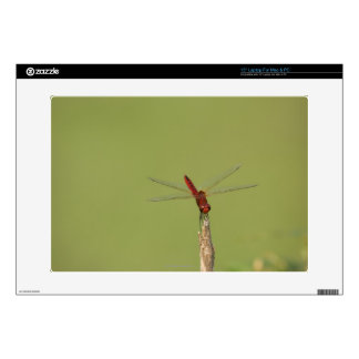 A Dragonfly rests momentarily on a dried weed Laptop Skin