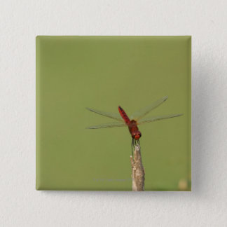 A Dragonfly rests momentarily on a dried weed Pinback Button