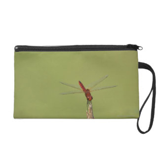 A Dragonfly rests momentarily on a dried weed Wristlet Purse