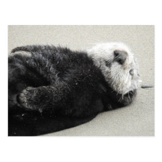 A dreaming sea otter postcard