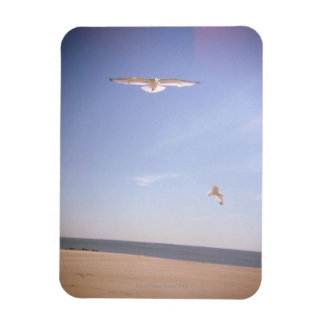 a dreamy image of seagulls flying at the beach magnet