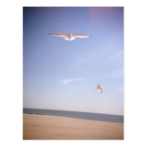 a dreamy image of seagulls flying at the beach post card