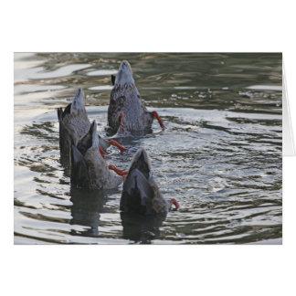 A duck dance card