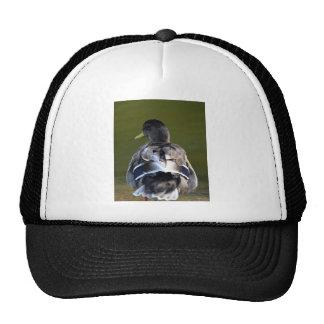 A Duck's Tale Trucker Hat