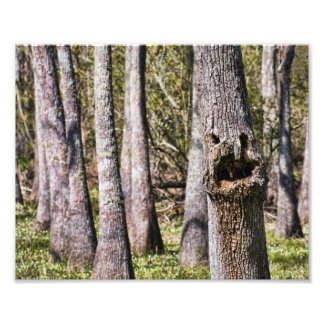 A Face in the Louisiana Swamps Photo Print