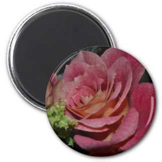 A Fairy's Rose Refrigerator Magnets