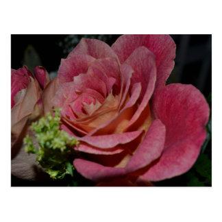 A Fairy's Rose Post Card