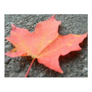 A Fallen Leaf Postcard