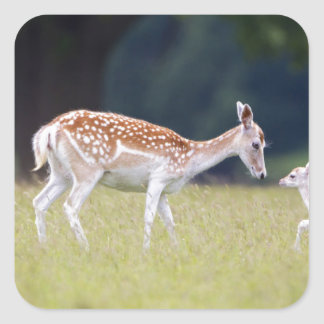 A Fallow Deer (Doe) with Fawn Square Sticker