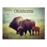 A Family of Bison in Oklahoma Postcard