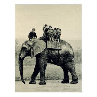A Farewell Ride on Jumbo Postcard