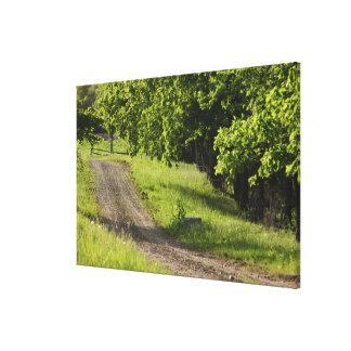 A farm road in Ipswich, Massachusetts. Canvas Print