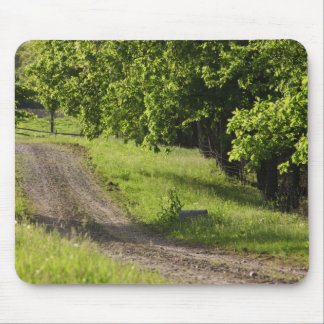 A farm road in Ipswich, Massachusetts. Mouse Pad