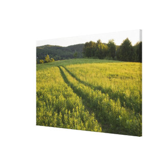 A farm road in Sabins Pasture in Montpelier, Canvas Print