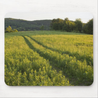 A farm road in Sabins Pasture in Montpelier, Mouse Pad