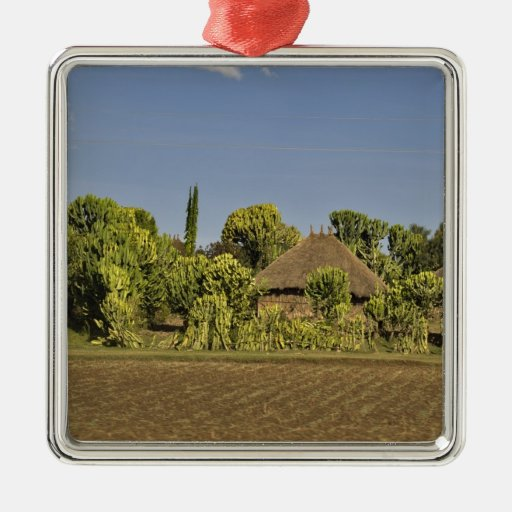 A farmed field in front of thatched roof houses square metal christmas ornament