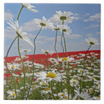 A farmland field of white ox-eyed daisies and 2 large square tile