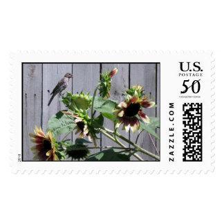 A Feast of Sunflower Seeds Postage