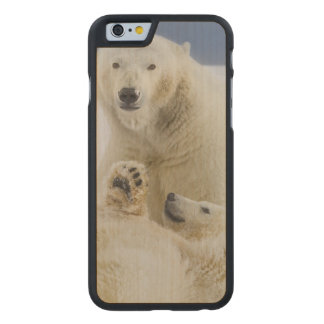 A female polar bear and her cub play in the snow carved® maple iPhone 6 slim case