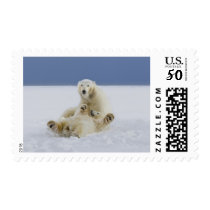 A female polar bear and her cub play in the snow postage