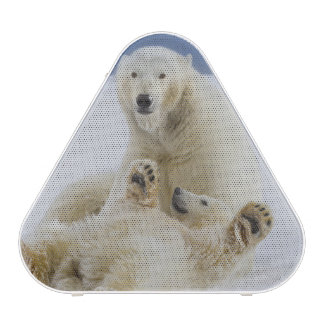 A female polar bear and her cub play in the snow speaker