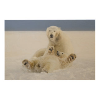 A female polar bear and her cub play in the snow wood print