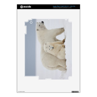 A female polar bear and two cubs sit together decals for iPad 3