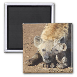 A female Spotted Hyena and her cub, Kruger 2 Inch Square Magnet
