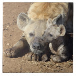 A female Spotted Hyena and her cub, Kruger Large Square Tile