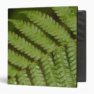 A fern detail, from Mindo Cloud Forest, Vinyl Binder