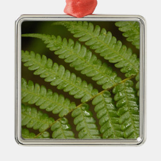 A fern detail, from Mindo Cloud Forest, Christmas Tree Ornament