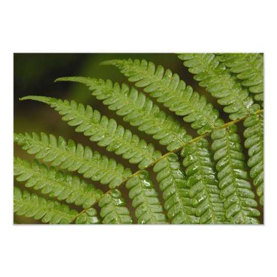 A fern detail, from Mindo Cloud Forest, Photo Print